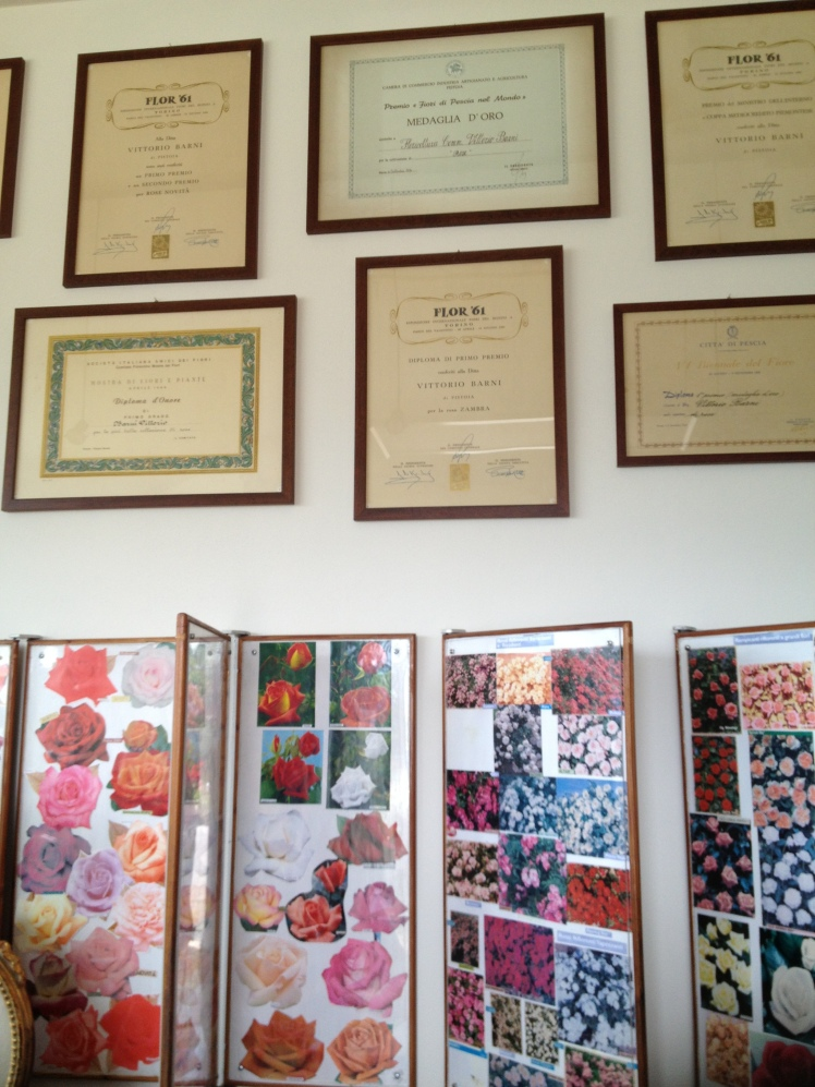 Rose Barni : more than 100 years of great certified success