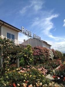 Rose Barni since 1882 in Pistoia,Tuscany, Italy