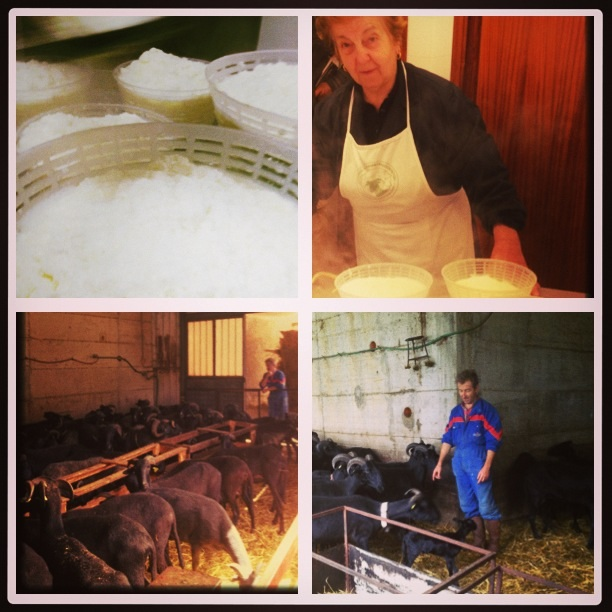 Great passion , hard work to make a top quality raw milk pecorino cheese