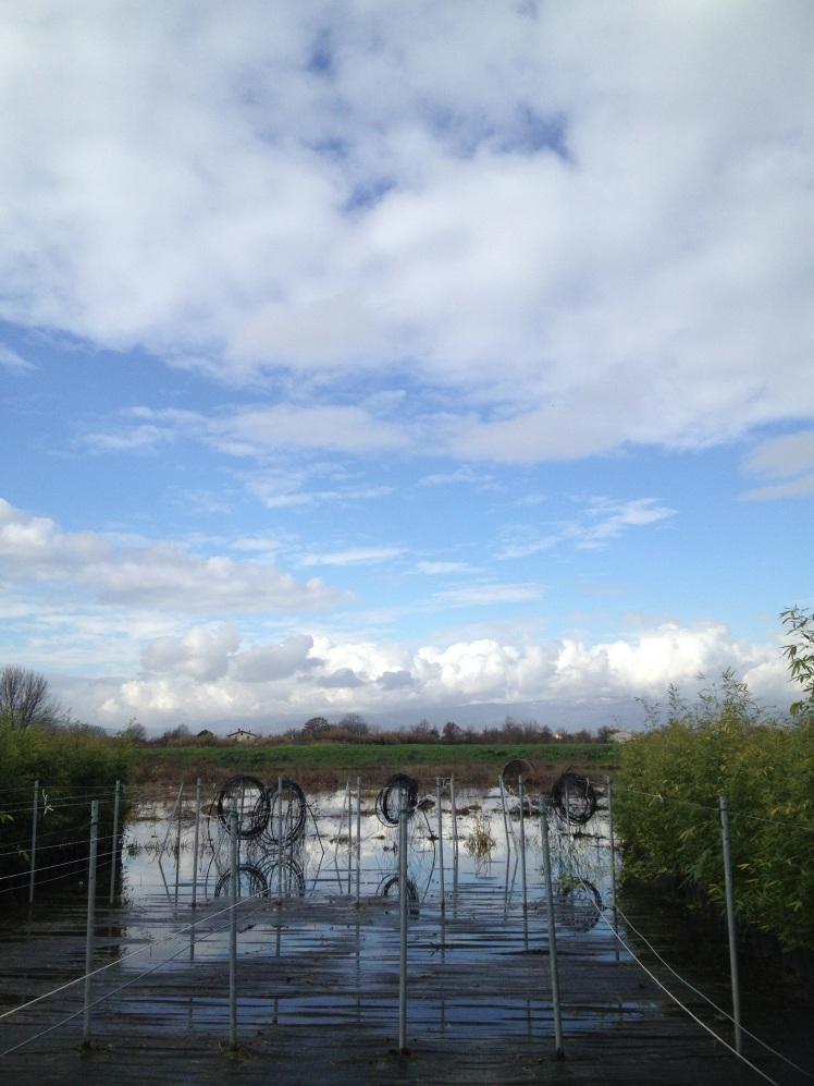 Pistoia : Nursery's landscape