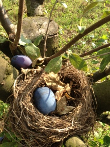 A  nest with a plum!
