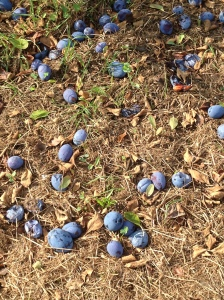 a pavement of plums
